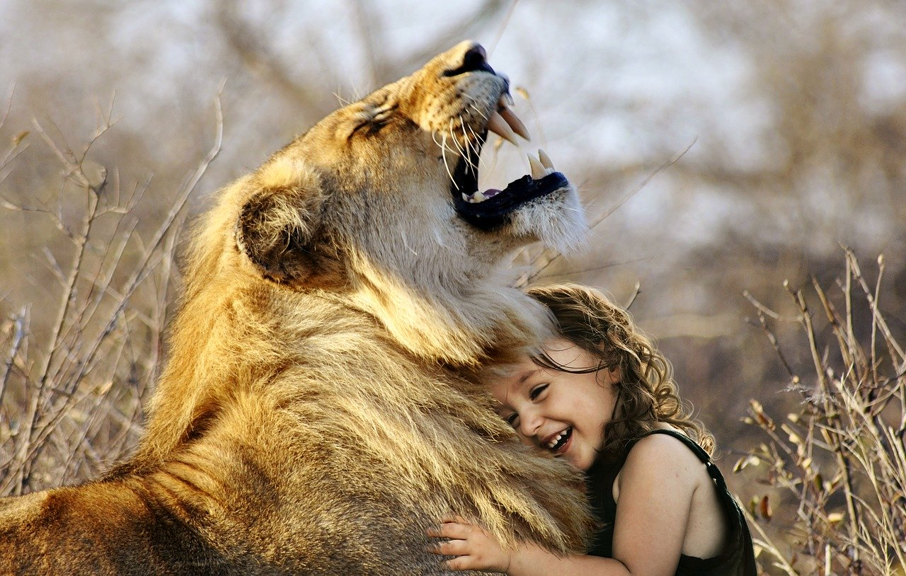 What can make you play with a lion?