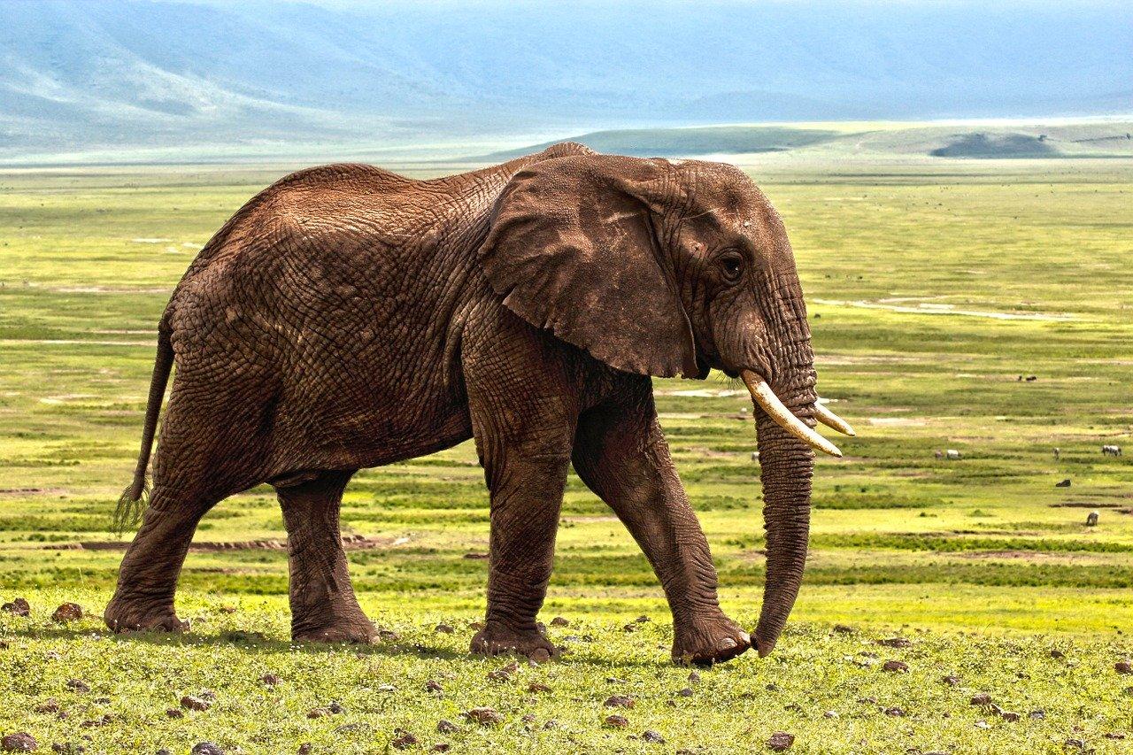 Elephant Collaring Adventure!
